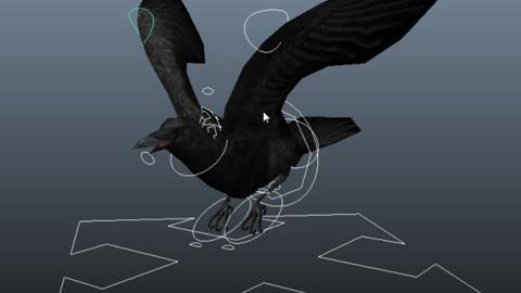 Rig Oiseau