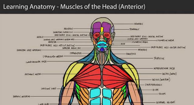 Anatomy learning com