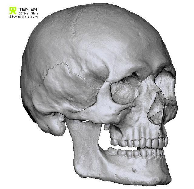 Ten24 - crâne
