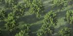 15 modèles d'arbres haute résolution gratuits