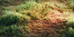 Créer un champ d'herbe sous Blender