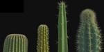 Modélisation procédurale de cactus sous Houdini, par Hakim Harrouche