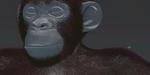 Mettre en place la fourrure d'un chimpanzé avec XGen sous Maya
