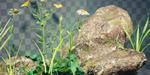 Blender : créer des éléments naturels low-poly
