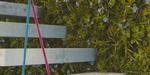 Vertical Garden, projet Blender par  Paulina Kochanowicz