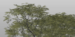 The Grove : faites pousser des arbres dans Blender