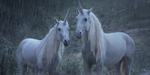 Mikros Image : making-of du spot Licorne pour Canal+