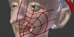 BlenRig 5 de sortie : une solution de rigging automatique et skinning pour Blender