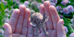 Magic Leap lève près de 800 millions de dollars