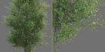 Maxscript : générateur d'arbres en cours de développement, par Ishak Suryo Laksono