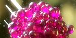 """Créer une """"Micro Jelly"""" sous Cinema 4D et Octane"""