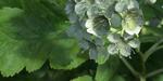 The Grove 3 : l'outil de création d'arbres pour Blender se met à jour
