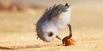 Piper : un extrait et un breakdown du nouveau court-métrage Pixar (MAJ)