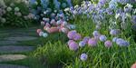 HDPlants : des végétaux pour 3ds Max