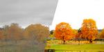 Philip Bloom : sélection des meilleurs profils d'image pour filmer sur réflex Canon