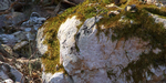 Quixel lance Megascans, librairie de scans 3D, surfaces et végétation