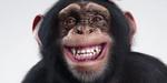 Le studio Notan donne vie à un chimpanzé