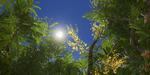 Un générateur d'arbres et plantes pour Unreal Engine