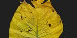 Peinture et plantes tropicales : Megascans se met à jour
