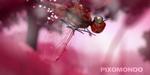 Démoreel : Pixomondo