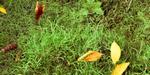 Créer de l'herbe sous Blender