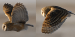Animer un oiseau en vol : observations et astuces de Brendan Body