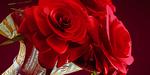 Modéliser des roses sous Blender