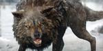 ZBrush : mise en place de la fourrure d'un loup