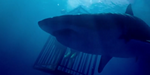 Outpost VFX : des requins affamés pour In the Deep