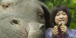 Retour sur les effets d'Okja (MAJ : nouvelle vidéo)
