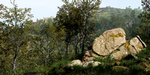 Créer une forêt sous CryEngine avec Quixel Megascans