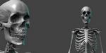 Un squelette gratuit à télécharger pour ZBrush
