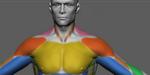 Leçon d'anatomie sous ZBrush