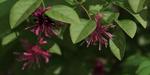E-On lance la Release 4 de Vue et PlantFactory 2016