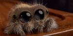 Lucas, une sympathique araignée animée par Joshua Slice