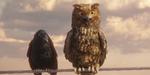 Oiseaux et lignes à haute tension, par Sehsucht