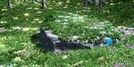 Vegetation Studio : un outil pour vos plantes sous Unity