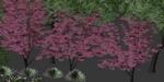 ATree3D v3.0, outil de création d'arbres et plantes sous 3ds Max