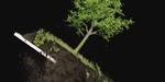 Simulation de terre et arbre sous Houdini, par Peter Sanitra