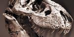 Inspiration : T-Rex, robots autonomes, Lovecraft et mai 68