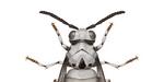 Des insectes inspirés de l'univers Star Wars, par Richard Wilkinson