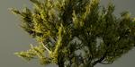 Un pack d'arbres gratuits à télécharger