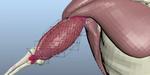 Ziva VFX 1.4 : l'outil de simulation de muscle et chair se met à jour