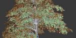 Comment créer un arbre sous Blender avec Modular Tree
