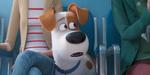 Comme des bêtes 2 : une première bande-annonce chez le vétérinaire
