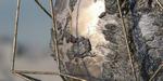 Débuter avec Substance Alchemist : webinar le 29 mars à 12h30, en français