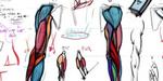 Dessin des muscles, tête humaine : Dorian Scherrer propose des vidéos d'anatomie artistique