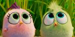Une nouvelle bande-annonce pour Angry Birds : Copains comme Cochons