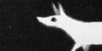 Annecy 2019 : un cadavre exquis à l'écran d'épingles