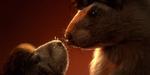 Marmottes Mikros : 5 années de rongeurs parodiques